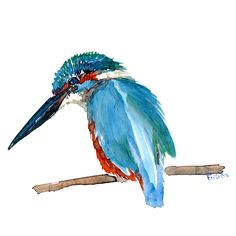 Kingfisher watercolor illustration #watercolour #art