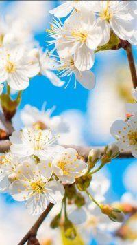 Earth Blossom Flowers Mobile Wallpaper