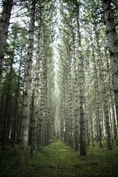 Forests in Ontario are always mystical - ✮ Forest Fantasy - Thunder Bay, Ontario