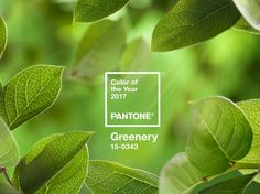 The Pantone Color Institute has unveiled it's color of the year for Greenery. The color will likely influence design trends across many industries. We look forward to seeing this fresh, yellow-green hue in Photo Source: Pantone Color Of The Year 2017 Pantone, Pantone Color, Color 2017, 2017 Colors, Go Green, Green Colors, Bright Green, Color Trends, Design Trends