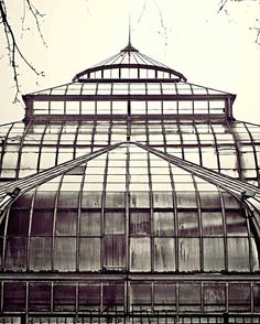 Detroit Photography  Belle Isle Conservatory  by AlannaPfeffer, $30.00