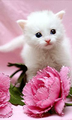 THE PINK FLOWERS SHIMMER AND THE WHITE CAT BLINKS IT'S EYES AND MOVES A LITTLE...