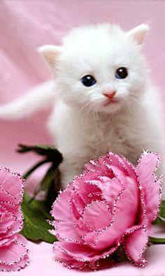 Kitty. (GIF)