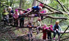 L'île où les enfants ont école dans les bois