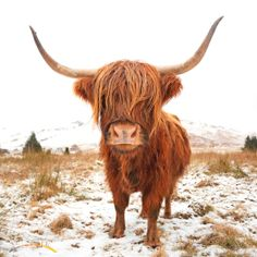 After soaking up Edinburgh, hightail it to the Scottish highlands where you may meet this bonnie fellow! For more UK & Europe travel inspiration, visit www.hot.co.nz