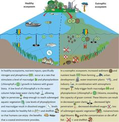 Image result for permaculture diagrams