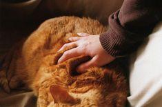 orange fat cat