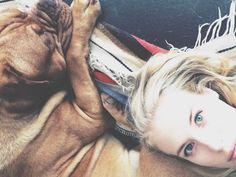 #newtonthefrenchmastiff // Newton die Bordeaux Dogge