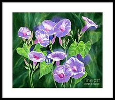 Lavender Morning Glories With Background Framed Print by Sharon Freeman