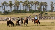 Zebra migration safari on horseback. Botswana.