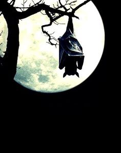 Hanging by the light of the full moon. : Hanging by the light of the full moon. Shoot The Moon, Moon Pictures, Theme Halloween, Halloween Night, Happy Halloween, Creatures Of The Night, Moon Magic, Arte Horror, Beautiful Moon