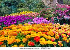 Flower-garden Stock Photos, Images, & Pictures | Shutterstock