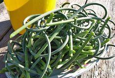 Я, как и большинство дачников, ежегодно выращиваю на своем участке озимый чеснок, который во второй половине июня начинает выбрасывать стрелки. Как известно, для получения более крупных головок их необходимо своевременно удалять, ведь они забирают у растения около 30-40% питательных веществ. Процеду Cauliflower Vegetable, Green Beans, Vegetables, Food, Garlic, Ideas, Food Recipes, Meal, Essen