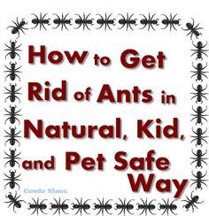 Five Things You Absolutely Must Do to Get Rid of Ants in a Pet and Kid Safe Natural Way #home #diy #pest