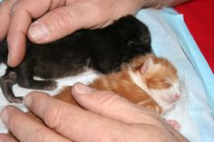 Basic tips on fostering kittens; A challenging and rewarding experience