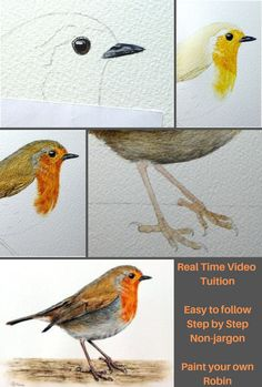 Vimeo - The Devon Artist Watercolor Paintings For Beginners, Watercolor Art Lessons, Watercolour Tutorials, Watercolor Bird, Watercolour Painting, Painting & Drawing, Robin Drawing, Bird Drawings, Pics Art