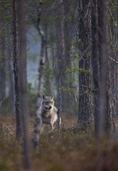 Wolf's Breathless Beauty and Sensual Nudity