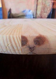 Qualcuno ti osserva...  #bastardidentro #panda #legno #tavolo