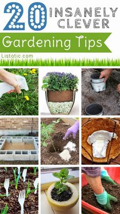 20 Insanely Clever Gardening Tips And Ideas ~ DIY Craft Project