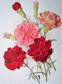 Antique floral print - I love the antique look.
