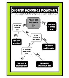 This organic macromolecule flowchart walks the student through a series of questions to identify the 4 main organic molecules: carbohydrates, lipids (saturated and unsaturated), proteins and nucleic acids. Especially for students who struggle with organization and need concrete steps and scaffolding.