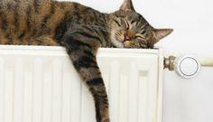 cat sleeping on radiator Fireplace Vent, Cat Symptoms, Clocks Go Back, Lay Down The Law, Hydronic Heating, Cat Behavior, Cat Sleeping, Central Heating, Cat Health