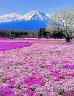 Mt Fujii Japan
