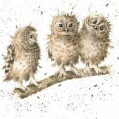 Selling prints, artwork, paintings and hosting a collection of original and popular artists. Watercolor Bird, Watercolor Animals, Watercolor Paintings, Watercolours, Owl Art, Bird Art, Animal Paintings, Animal Drawings, Wrendale Designs