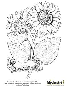 line art coloring pagesFOR ADULTS | Free Coloring Page: Color Your Own Great Flower Prints Coloring Book ...
