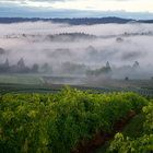 Four Oregon pinots make list of world's most exciting wines