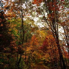 The fall leaves along the #RailTrail in the #HudsonValley #UlsterCounty