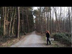 Wie lernt mein Hund andere Hunde zu ignorieren? – Mit Leine- – Undercover Labrador