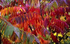 Small Gardens, Dream Garden, Trees, Gardening, Future, Plants, Painting, Beauty, Future Tense