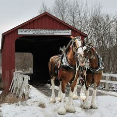 Clydesdale Horse in Snow | Covered Bridge and Clydesdales by Stephen Beatty - Artistic Objects ...