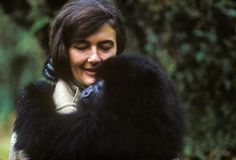 Dian Fossey ( January 16, 1932 – December 27, 1985) was an American zoologist who undertook an extensive study of gorilla groups over a period of 18 years. She was a passionate conservationist who devoted her life to the end to save mountain gorilla and its habitat for poachers and loggers.