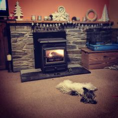 Pooch is knackered after his beach walk earlier it's been a lovely day. #puppy #dog #dogsofinstagram #fire