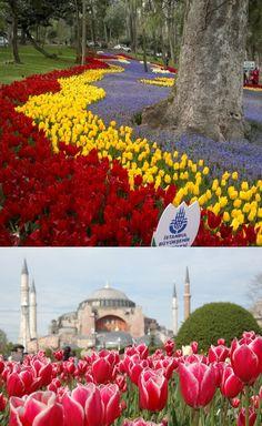 Come ogni Aprile e dal 2006 inizia il Festival dei Tulipani. 14 milioni di bulbi pronti a sbocciare. Il Tulipano é il simbolo nazionale floreale della Turchia e a questo fiore é legata la prima bolla speculativa della Storia avvenuta in Olanda: la bolla dei tulipani.