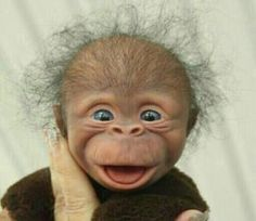 Animals Discover Lol but he& so cute Smiling Animals Happy Animals Cute Funny Animals Cute Baby Animals Funny Cute Animals And Pets Cute Animal Pictures Funny Pictures Hello Pictures Cute Little Animals, Cute Funny Animals, Cute Dogs, Cute Babies, Smiling Animals, Happy Animals, Animals And Pets, Cute Animal Pictures, Funny Pictures