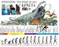 Evolution: The Story of Life Pseudo Science, Science And Nature, Human Evolution, Evolution Science, History Timeline, Extinct Animals, Prehistoric Creatures, World History, Anthropology