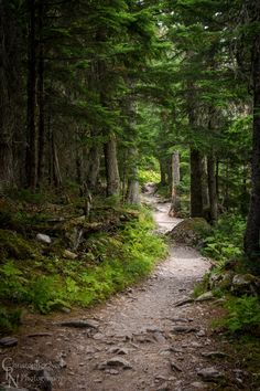 Avalanche Trail in Glacier National Park, MT // Christopher Neel Photography