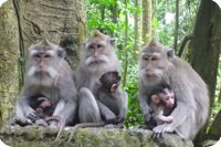 Ubud Monkey Forest and Temples, Bali, Indonesia Bali Tour Packages, Japanese Macaque, Monkey Forest, Magic Island, Bali Holidays, Holiday Activities, Tropical Paradise, Ubud, Day Tours
