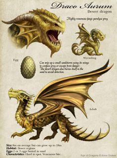 Desert dragon description by Anne Stokes Dnd Dragons, Dungeons And Dragons, Types Of Dragons, Magical Creatures, Fantasy Creatures, Fantasy Wesen, Dragon Facts, Dragon Anatomy, Mythical Dragons