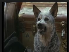 Planes, Trains and Automobiles movie has this ACD in it