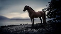 Due to domestication, the horse has become a common animal all over the world. That creature is ungulate — mammal with hooves. It also has short hair, long tail, muscular torso, prolonged head and long thick neck.  Read more at: https://underscience.com/horse-facts/