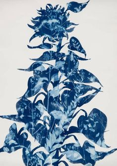 View this item and discover similar for sale at - American Giant is a Cyanotype by Cynthia MacCollum. It is on archival paper. According to MacCollum, 'As a painter Sun Prints, Nature Prints, Water Printing, Printing On Fabric, Cyanotype Process, American Giant, Sunflower Wallpaper, School Art Projects, Art Photography
