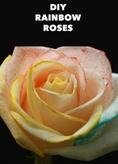 These DIY Rainbow Roses Are Pure Magic Come colorare le rose del colore desiderato