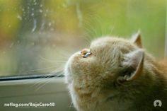 watching the rain come down...