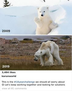 33 Uncomfortable Nature Photos For The 10 Year Challenge - ecological Save Planet Earth, Save Our Earth, Save The Planet, Save Mother Earth, Amor Animal, Sad Stories, Save Animals, Faith In Humanity, Animal Rights