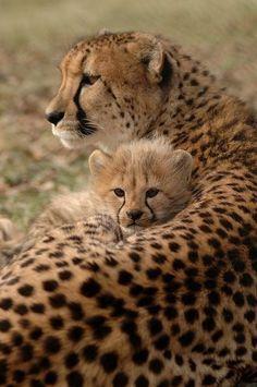 A loving mama #BigCatFamily