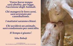 Chiudiamo i mattatoi ed eliminiamo le violenze fatte agli animali - La Via di Uscita